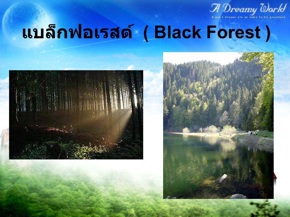 แบล็กฟอเรสต์ ( Black Forest )