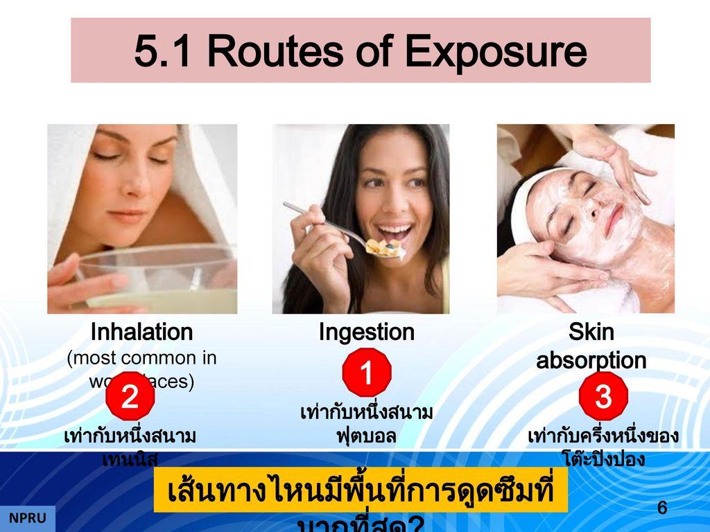 5.1 Routes of Exposure 1 2 3 เส้นทางไหนมีพื้นที่การดูดซึมที่มากที่สุด
