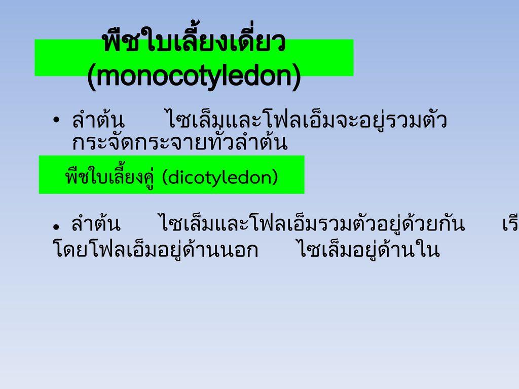 พืชใบเลี้ยงเดี่ยว (monocotyledon)