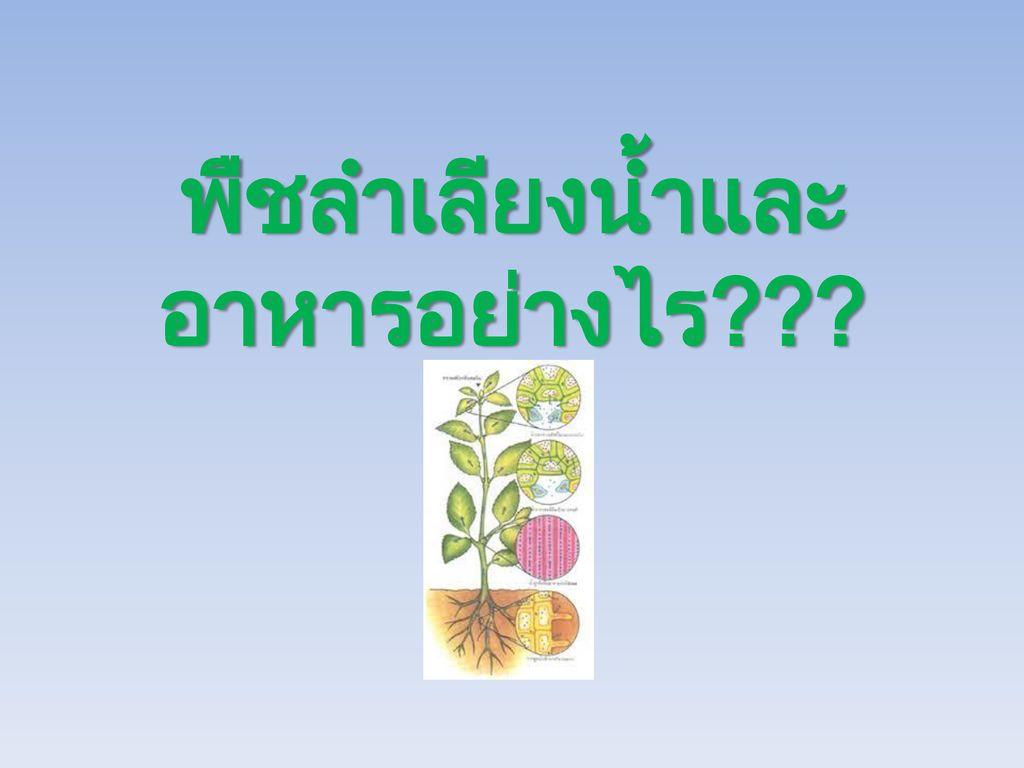 พืชลำเลียงน้ำและอาหารอย่างไร