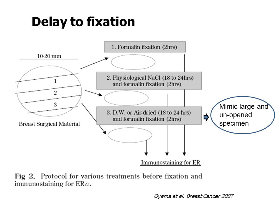 Delay to fixation Effects from fixation & fixative type