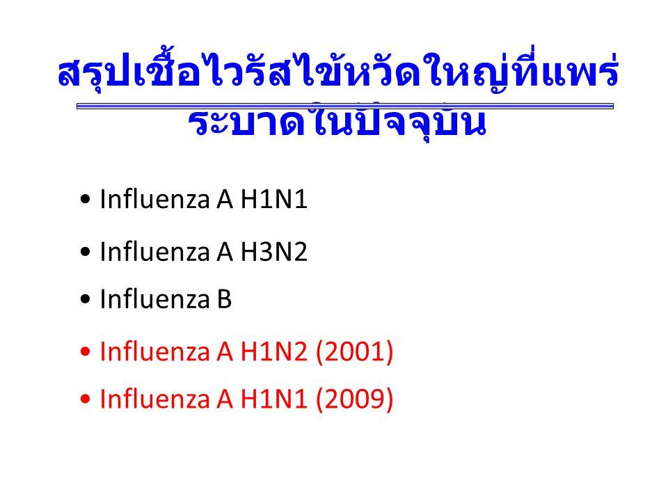 สรุปเชื้อไวรัสไข้หวัดใหญ่ที่แพร่ระบาดในปัจจุบัน