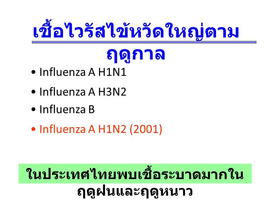 เชื้อไวรัสไข้หวัดใหญ่ตามฤดูกาล