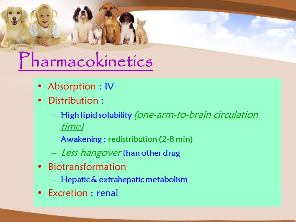 Pharmacokinetics Absorption : IV Distribution :