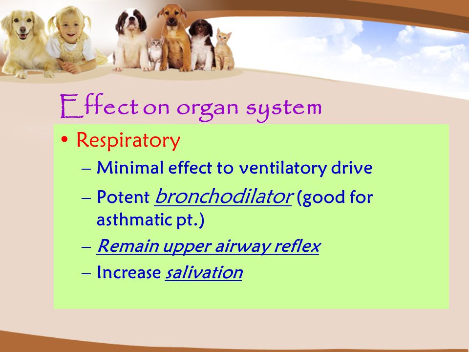 Effect on organ system Respiratory Minimal effect to ventilatory drive