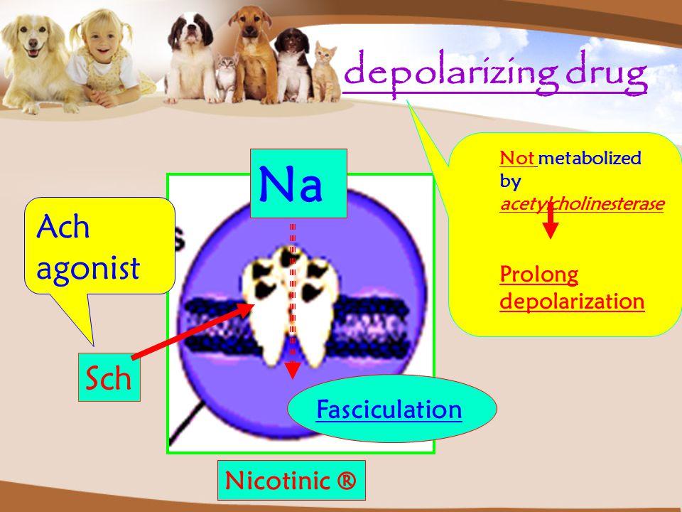 Na depolarizing drug Ach agonist Sch Fasciculation Nicotinic ®