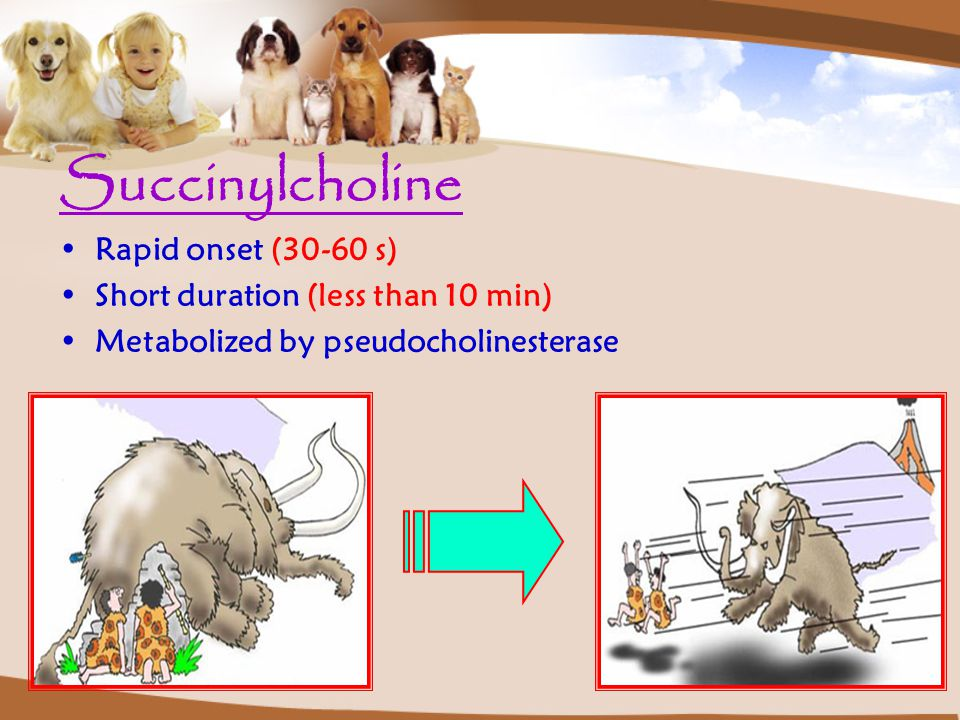 Succinylcholine Rapid onset (30-60 s)