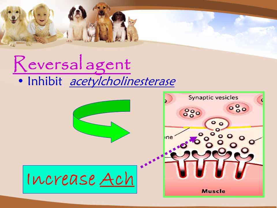 Reversal agent Inhibit acetylcholinesterase Increase Ach