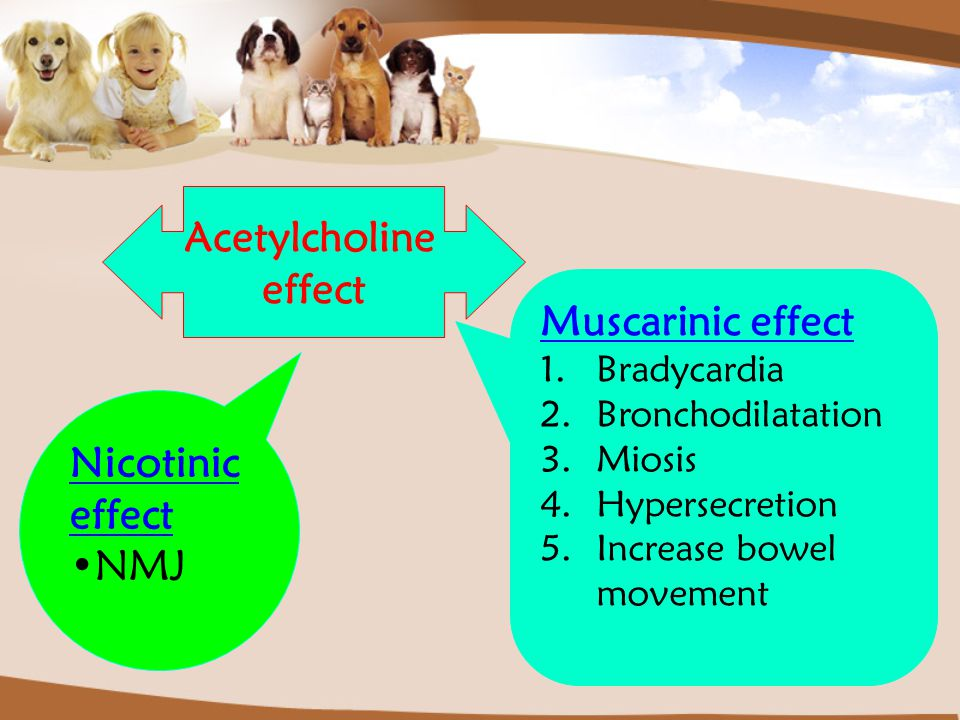 Acetylcholine effect Muscarinic effect Nicotinic effect NMJ