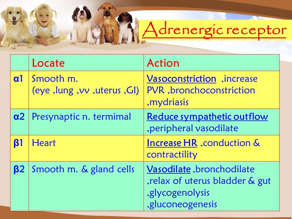 Adrenergic receptor Locate Action α1 Smooth m.