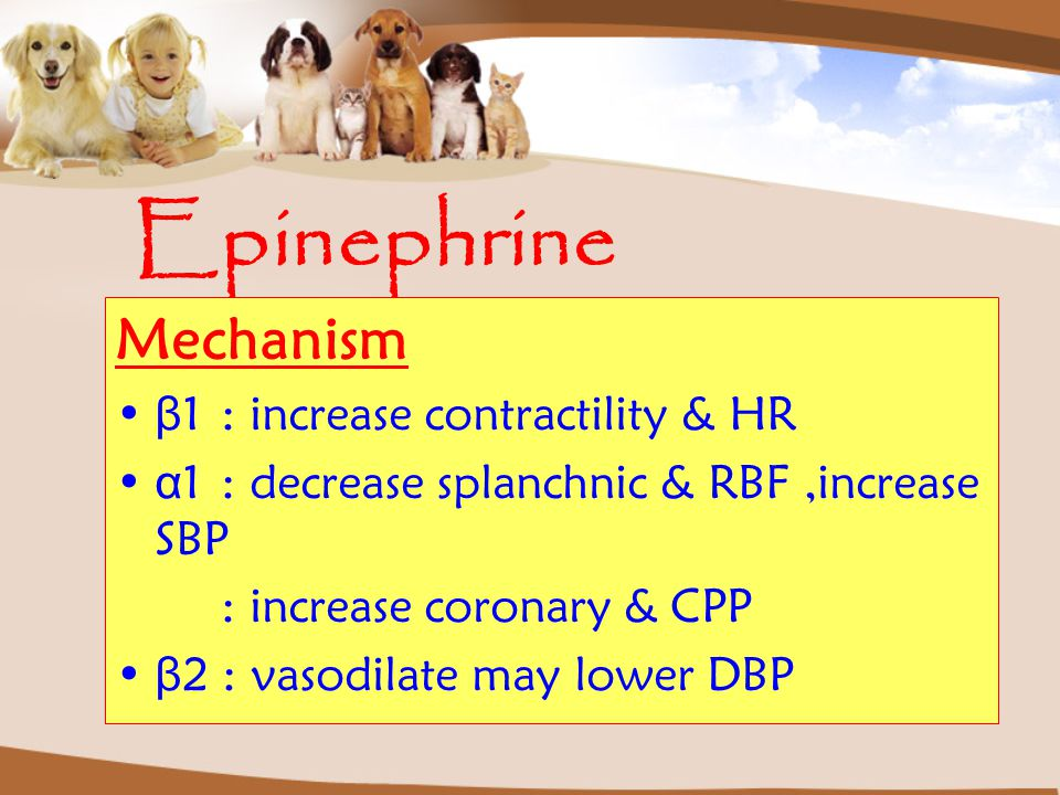 Epinephrine Mechanism β1 : increase contractility & HR