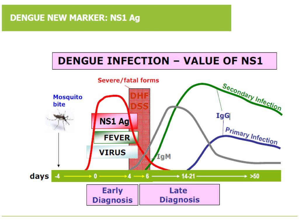 คำจำกัดความ : ไข้เลือดออกที่ช็อก (Dengue shock syndrome - DSS)