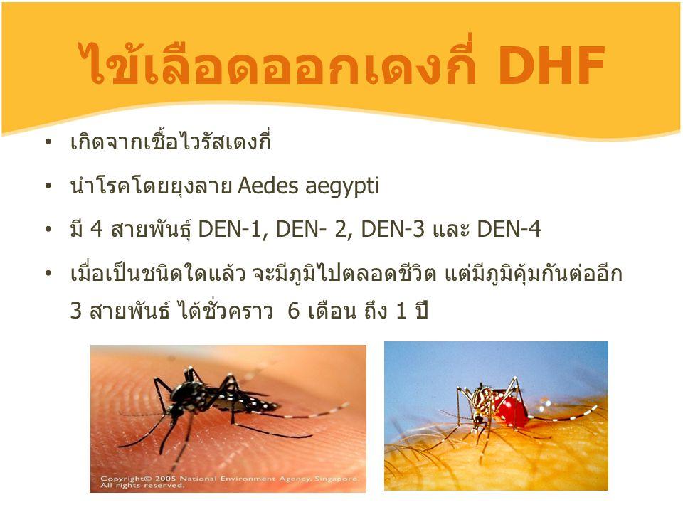 ไข้เลือดออกเดงกี่ DHF