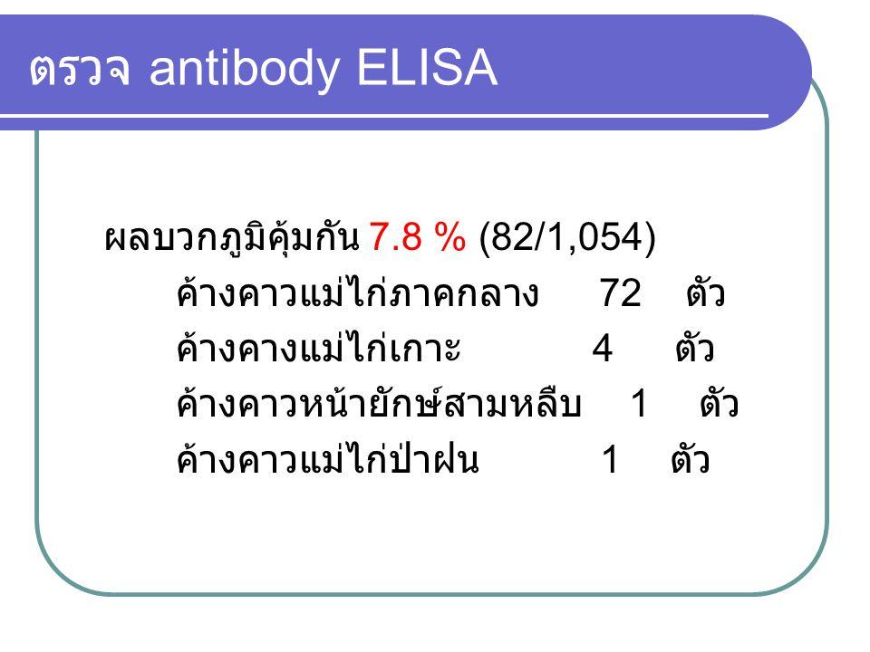 ตรวจ antibody ELISA ผลบวกภูมิคุ้มกัน 7.8 % (82/1,054)