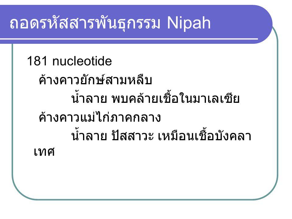 ถอดรหัสสารพันธุกรรม Nipah