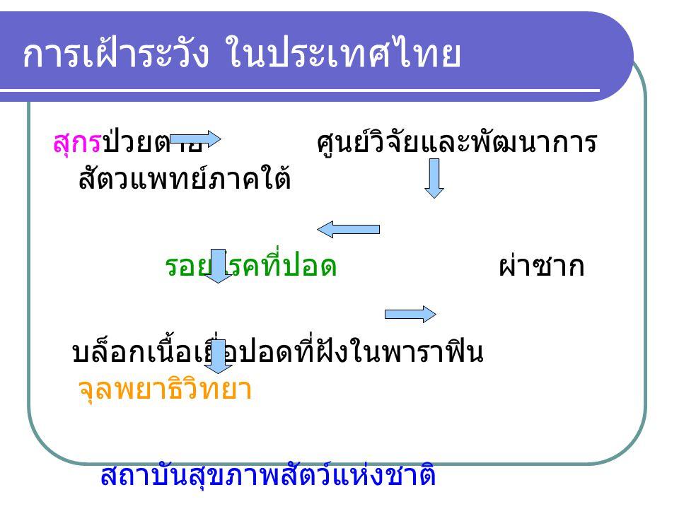 การเฝ้าระวัง ในประเทศไทย