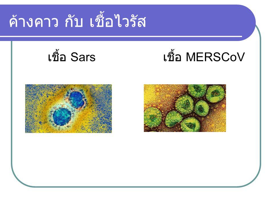 ค้างคาว กับ เชื้อไวรัส