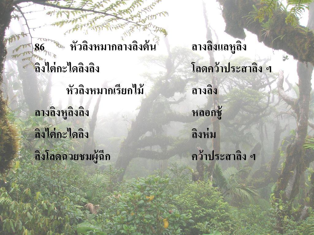 86 หัวลิงหมากลางลิงต้น ลางลิงแลหูลิง