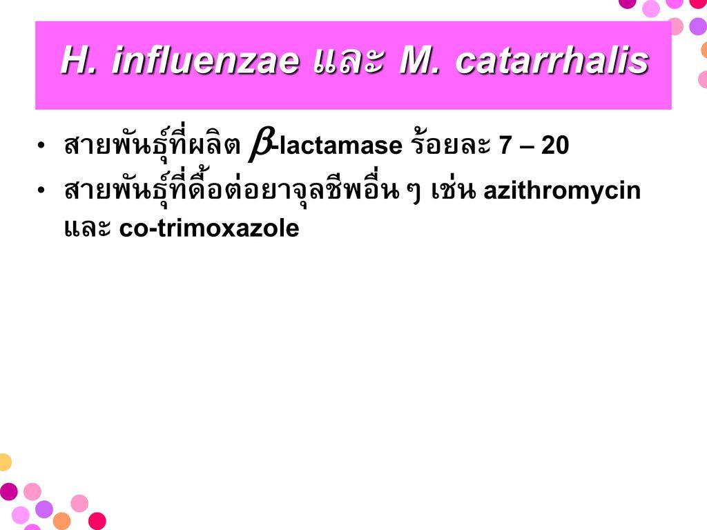 H. influenzae และ M. catarrhalis