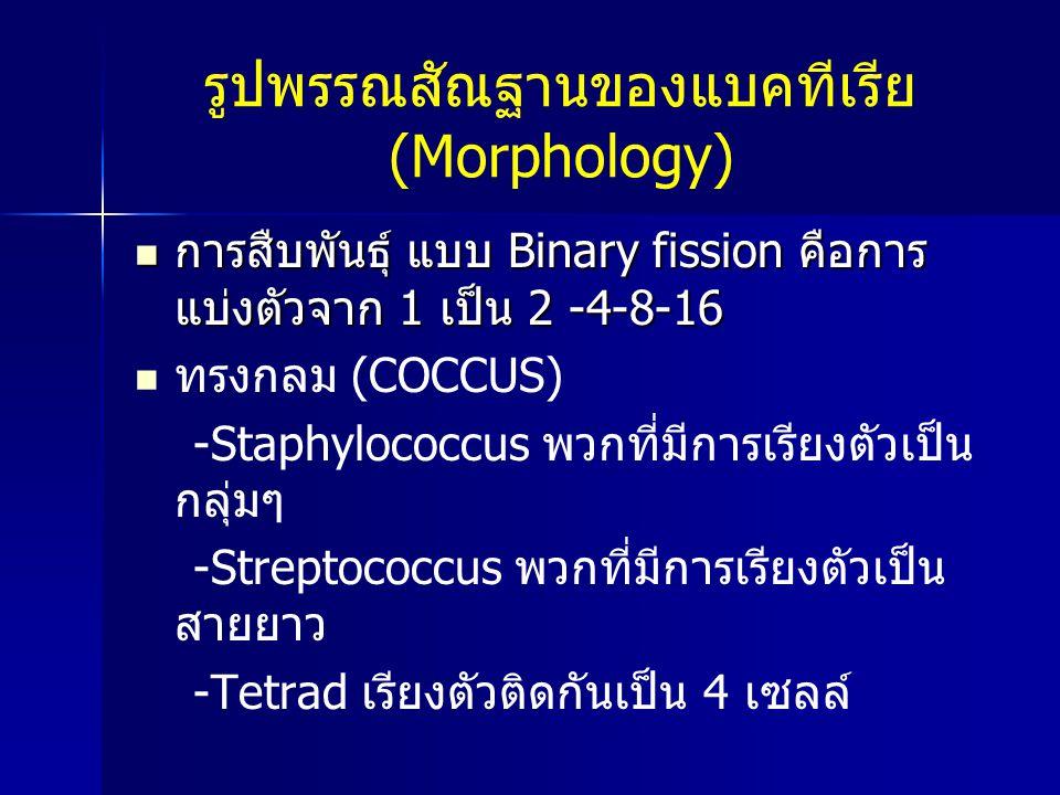 รูปพรรณสัณฐานของแบคทีเรีย (Morphology)