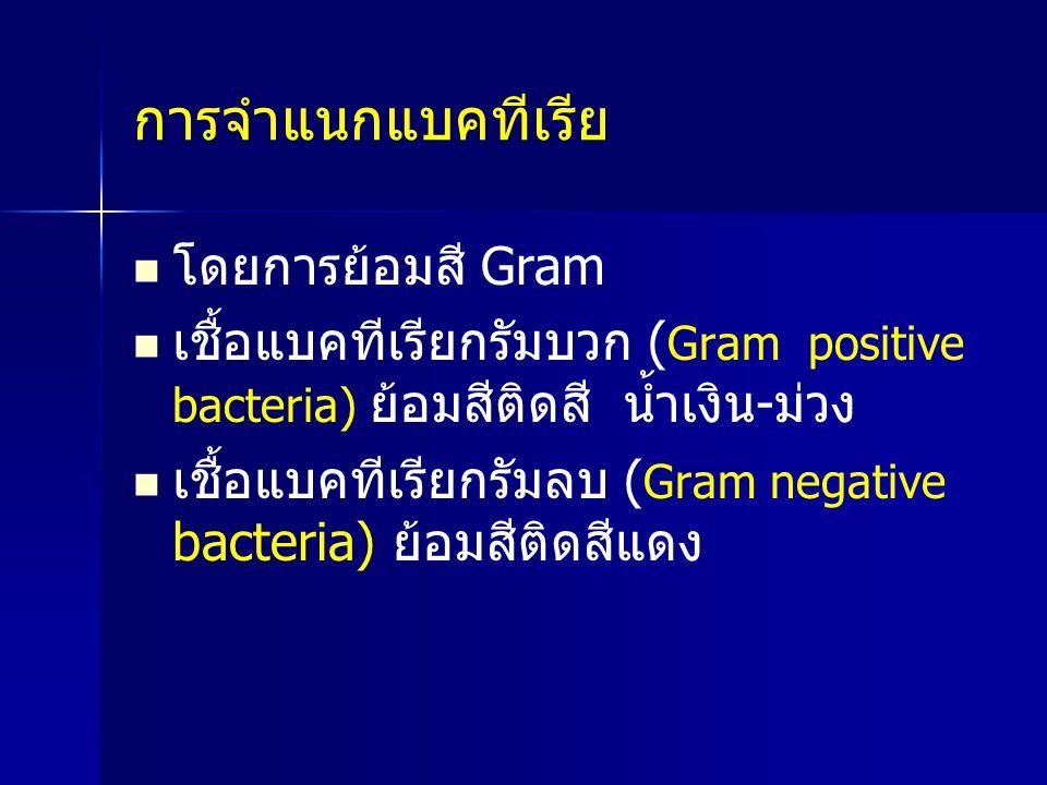 การจำแนกแบคทีเรีย โดยการย้อมสี Gram