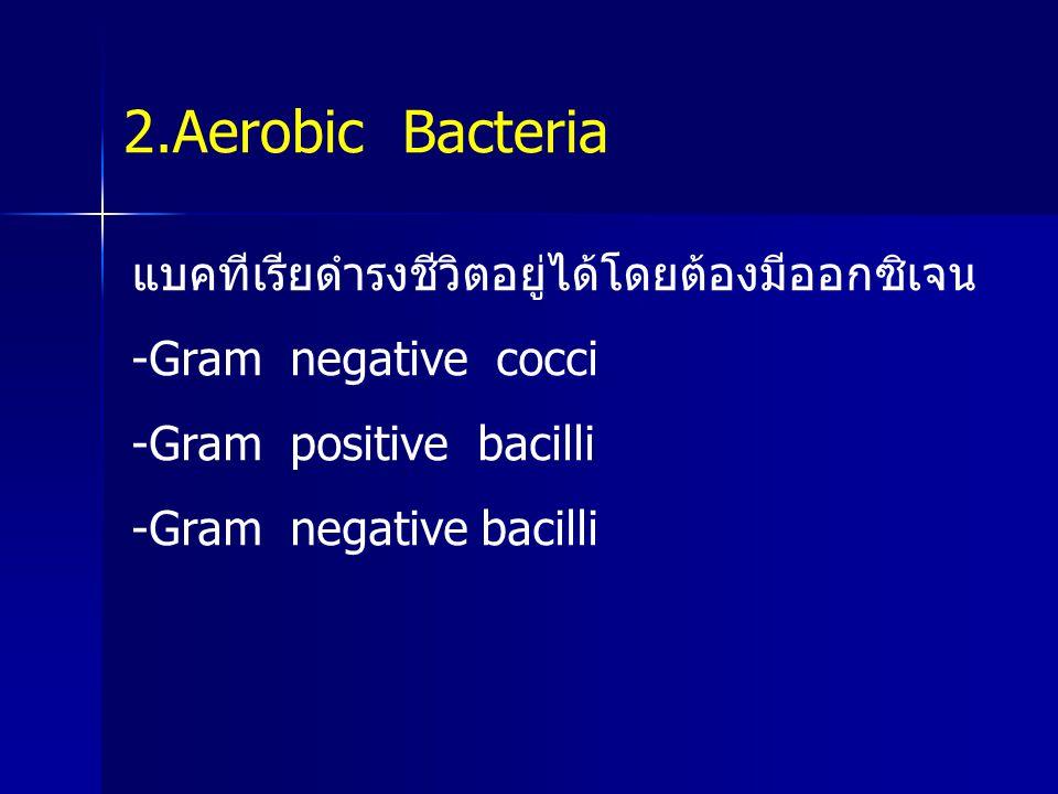 2.Aerobic Bacteria แบคทีเรียดำรงชีวิตอยู่ได้โดยต้องมีออกซิเจน