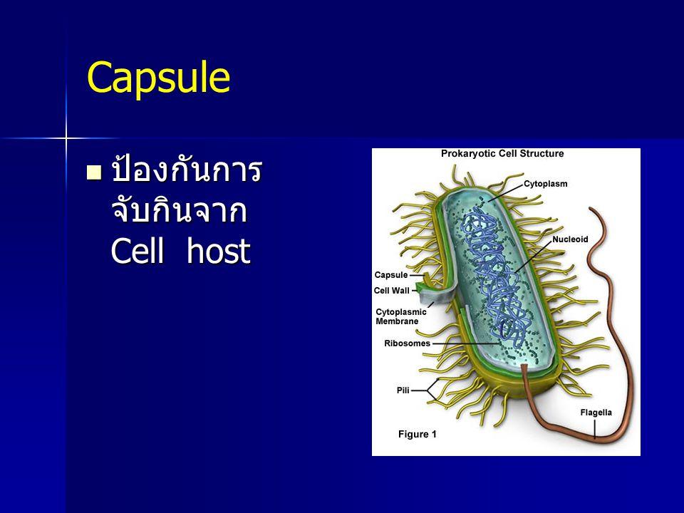 Capsule ป้องกันการ จับกินจาก Cell host