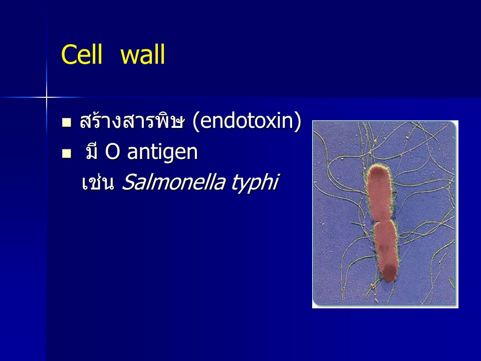 Cell wall สร้างสารพิษ (endotoxin) มี O antigen เช่น Salmonella typhi