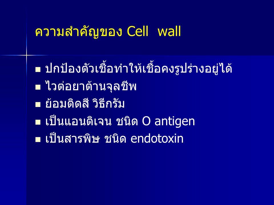 ความสำคัญของ Cell wall