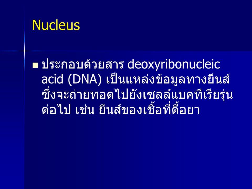 Nucleus ประกอบด้วยสาร deoxyribonucleic acid (DNA) เป็นแหล่งข้อมูลทางยีนส์ซึ่งจะถ่ายทอดไปยังเซลล์แบคทีเรียรุ่นต่อไป เช่น ยีนส์ของเชื้อที่ดื้อยา.