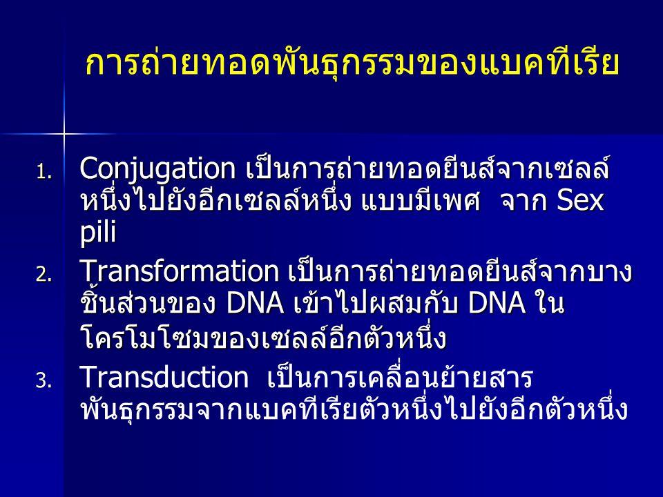 การถ่ายทอดพันธุกรรมของแบคทีเรีย