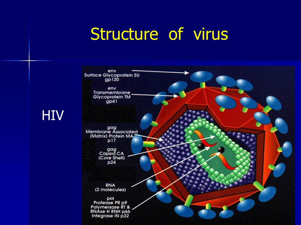Structure of virus HIV
