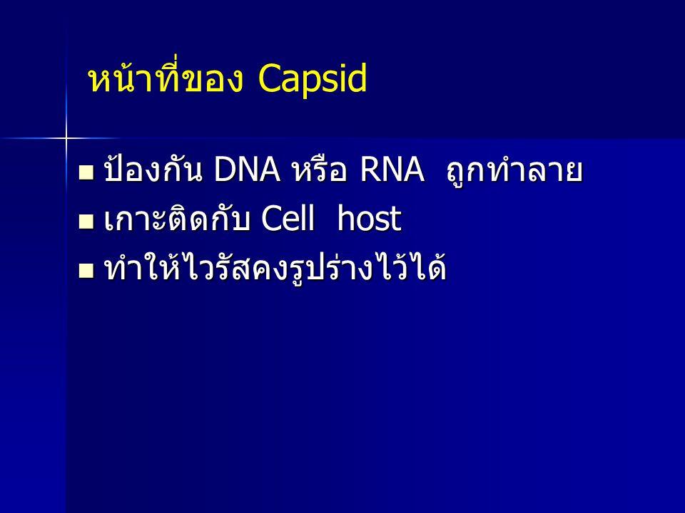 หน้าที่ของ Capsid ป้องกัน DNA หรือ RNA ถูกทำลาย เกาะติดกับ Cell host