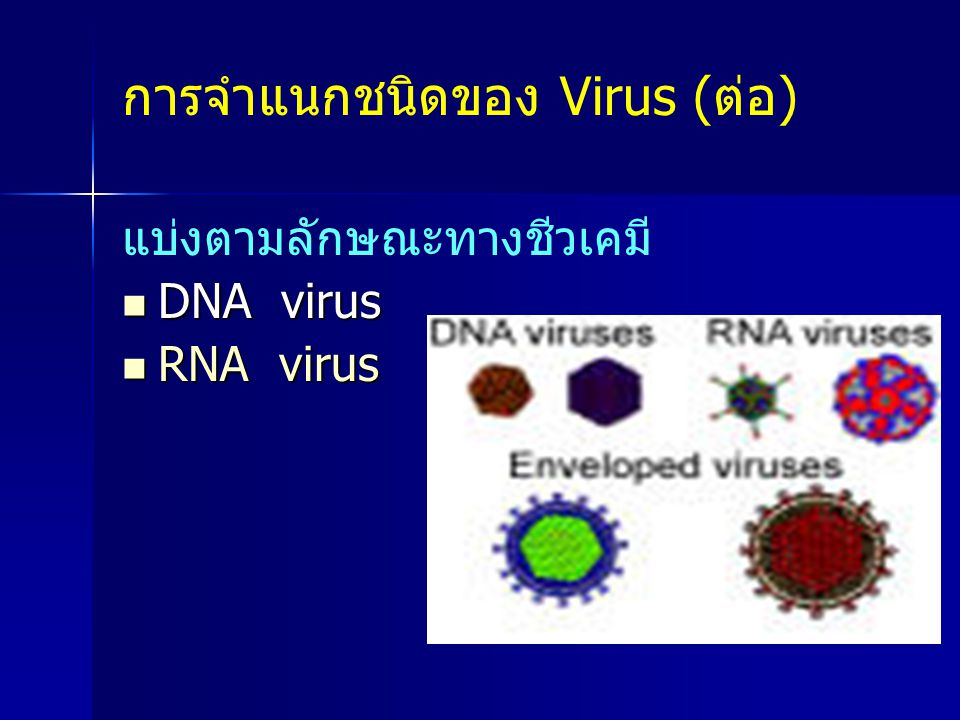 การจำแนกชนิดของ Virus (ต่อ)