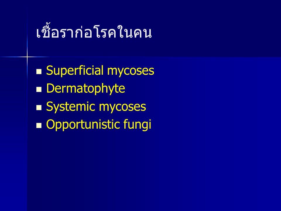 เชื้อราก่อโรคในคน Superficial mycoses Dermatophyte Systemic mycoses