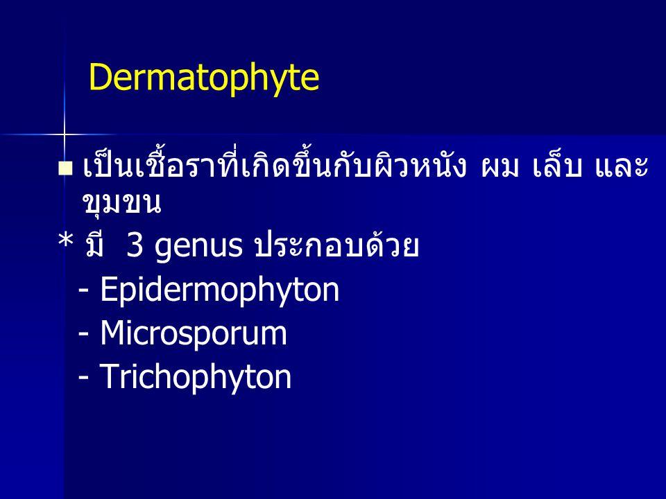 Dermatophyte เป็นเชื้อราที่เกิดขึ้นกับผิวหนัง ผม เล็บ และขุมขน