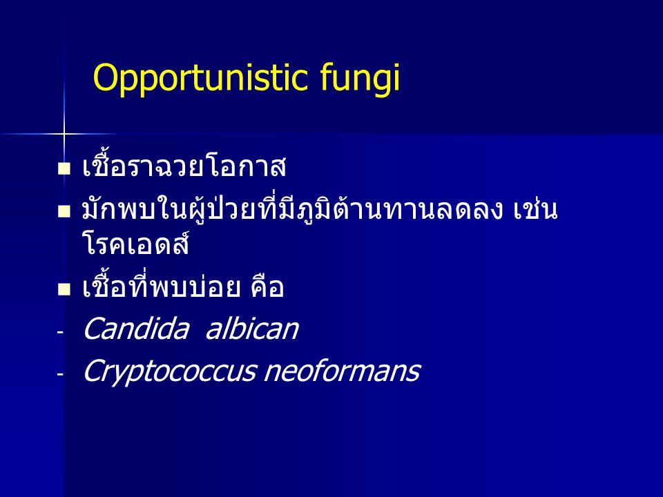 Opportunistic fungi เชื้อราฉวยโอกาส