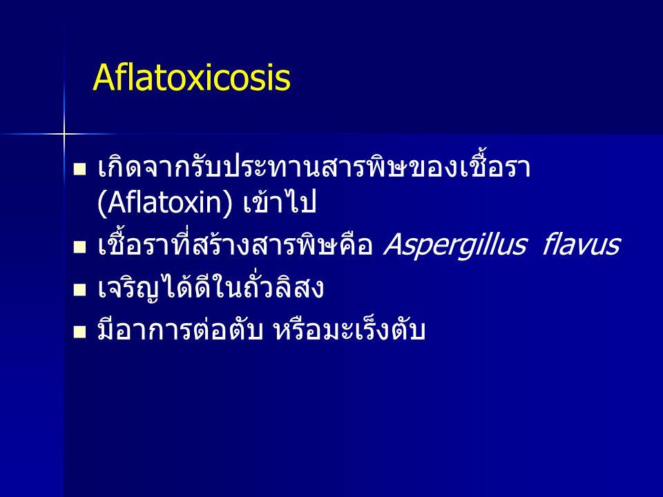 Aflatoxicosis เกิดจากรับประทานสารพิษของเชื้อรา (Aflatoxin) เข้าไป