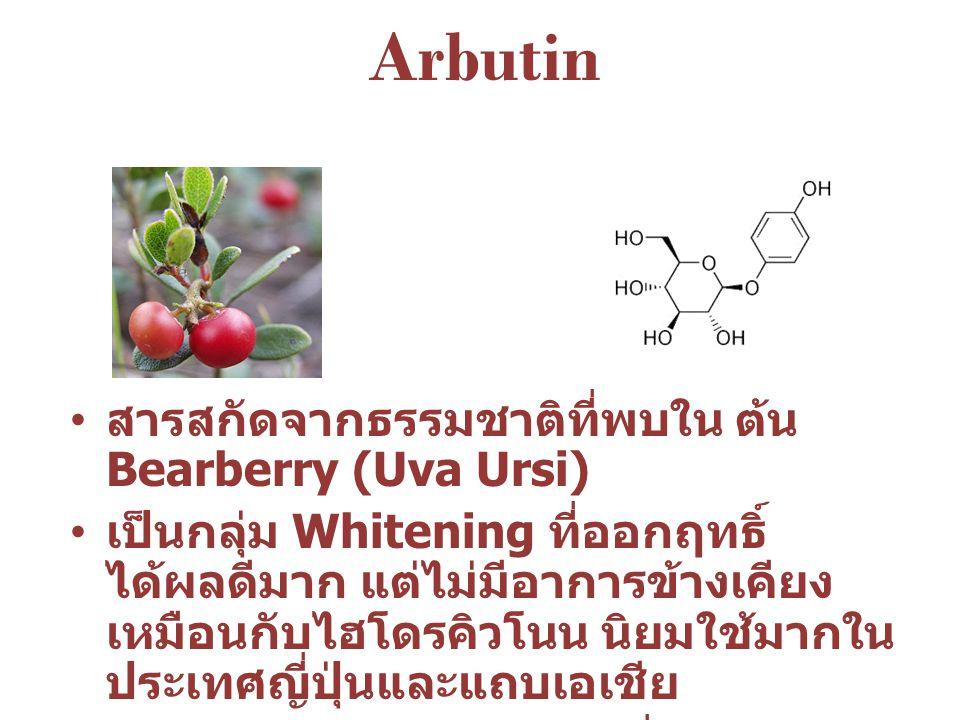 Arbutin สารสกัดจากธรรมชาติที่พบใน ต้น Bearberry (Uva Ursi)