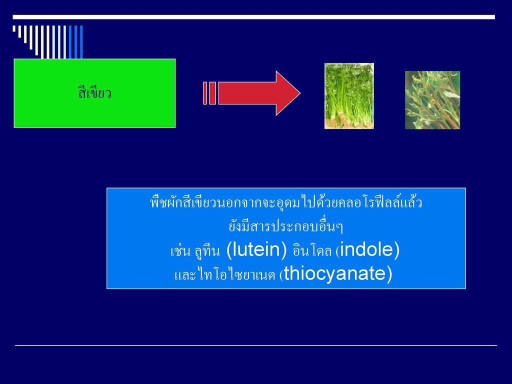 พืชผักสีเขียวนอกจากจะอุดมไปด้วยคลอโรฟีลล์แล้ว ยังมีสารประกอบอื่นๆ