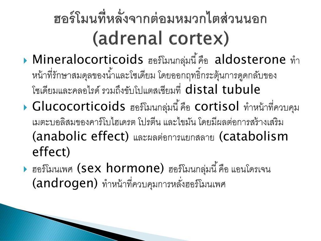 ฮอร์โมนที่หลั่งจากต่อมหมวกไตส่วนนอก (adrenal cortex)