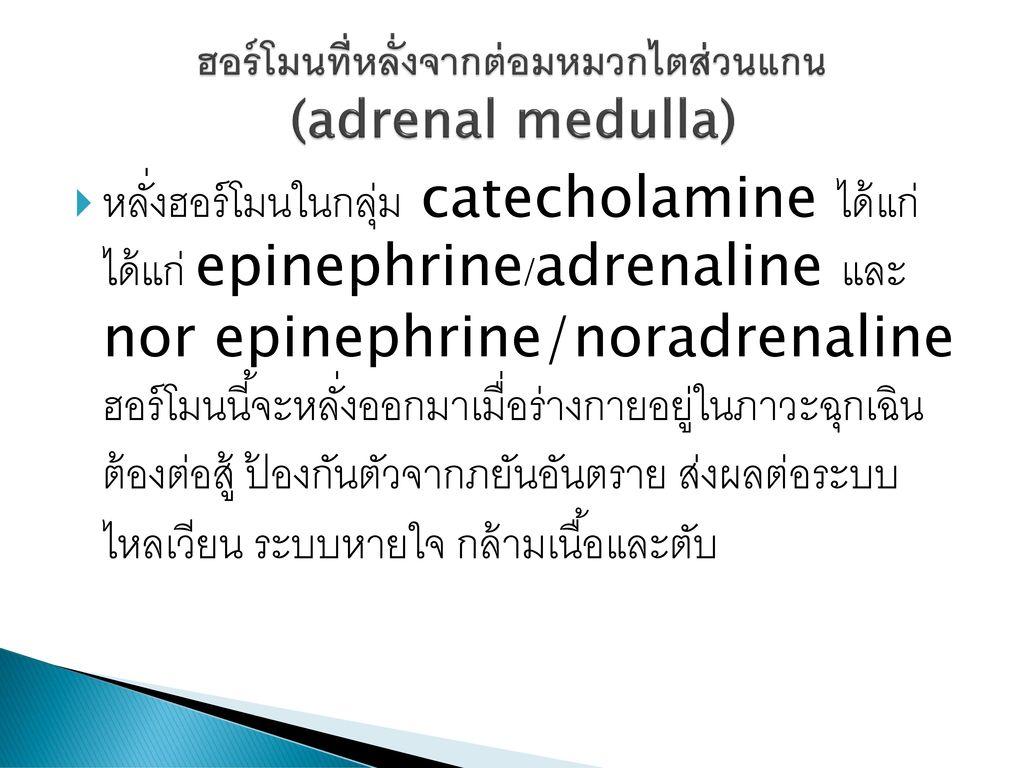 ฮอร์โมนที่หลั่งจากต่อมหมวกไตส่วนแกน (adrenal medulla)
