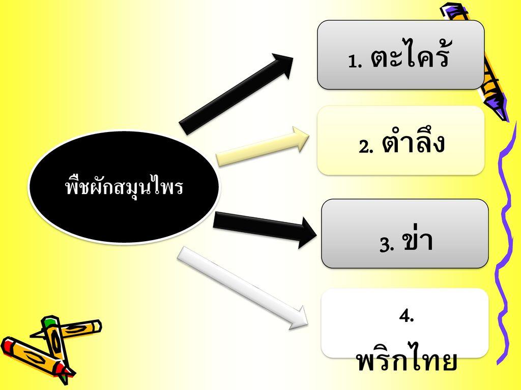 1. ตะไคร้ 2. ตำลึง พืชผักสมุนไพร 3. ข่า 4. พริกไทยอ่อน