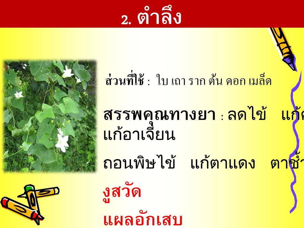 ส่วนที่ใช้ : ใบ เถา ราก ต้น ดอก เมล็ด