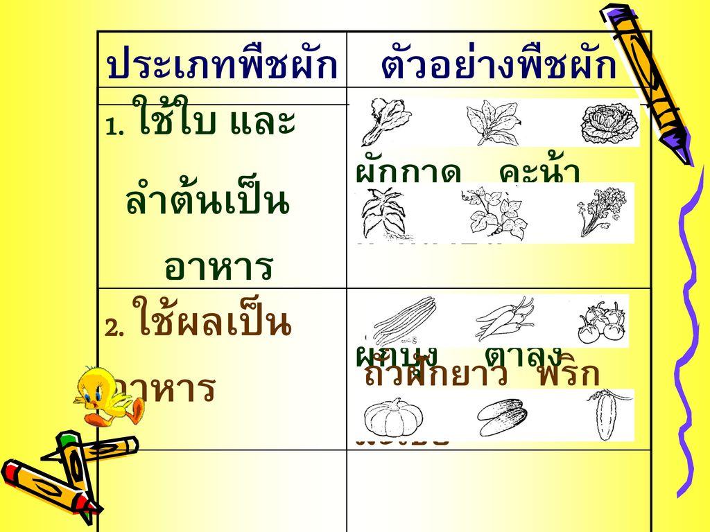 ประเภทพืชผัก ตัวอย่างพืชผัก