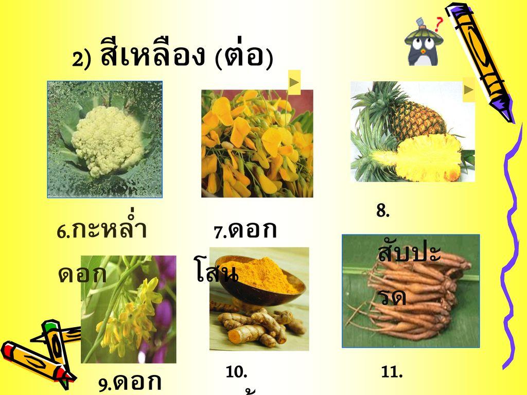 2) สีเหลือง (ต่อ) 8.สับปะรด 6.กะหล่ำดอก 7.ดอกโสน 9.ดอกขจร 10.ขมิ้นชัน