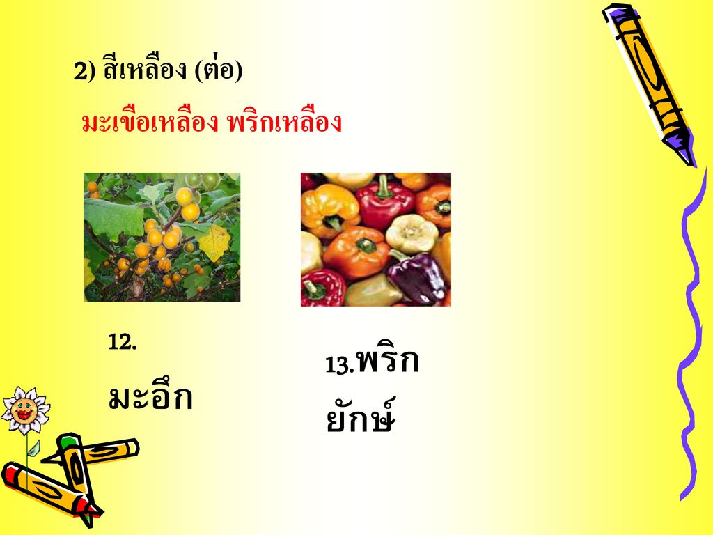 2) สีเหลือง (ต่อ) มะเขือเหลือง พริกเหลือง