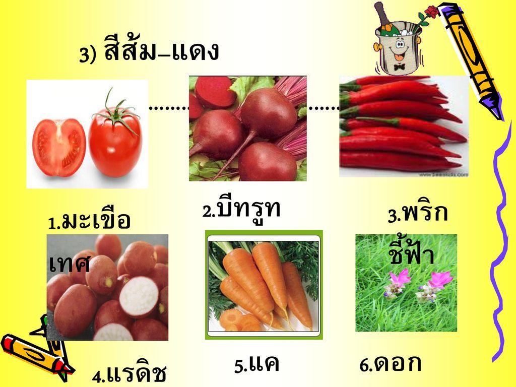3) สีส้ม–แดง ได้แก่………………………………….