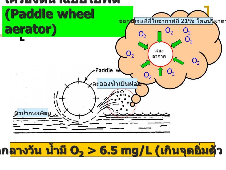 การเติม O2 ในน้ำด้วยเครื่องตีน้ำแบบใบพัด (Paddle wheel aerator)