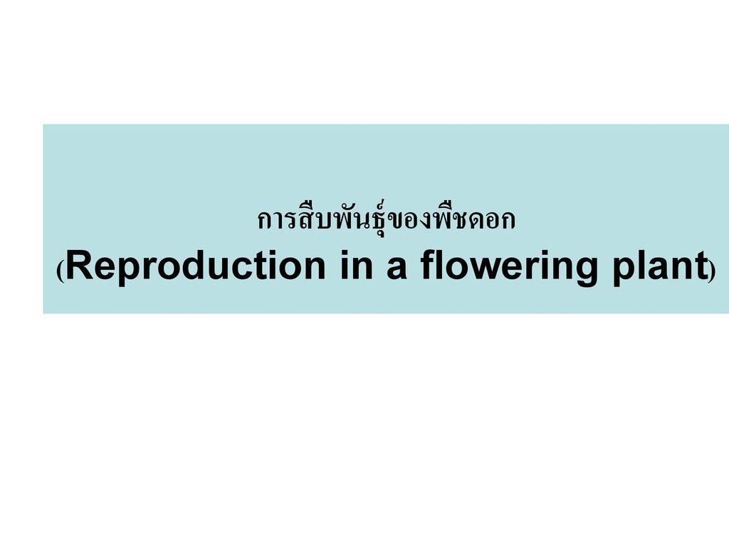 การสืบพันธุ์ของพืชดอก (Reproduction in a flowering plant)